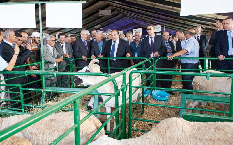 Doukkala-Abda: 50.000 visiteurs attendus à la première  foire de l'élevage