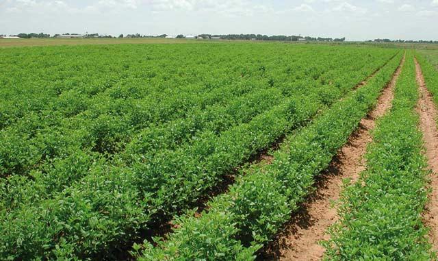 Oriental : hausse des terrains agricoles assurés contre les risques