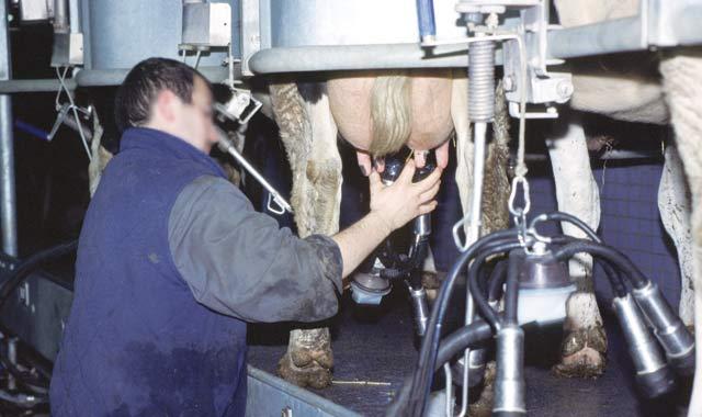 Filière laitière : Objectif, 4.5 milliards de litres de lait en 2020