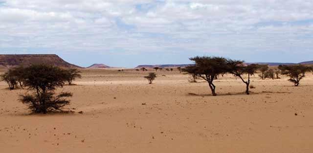 Smara : Plus de 24 millions DH pour lutter contre la désertification
