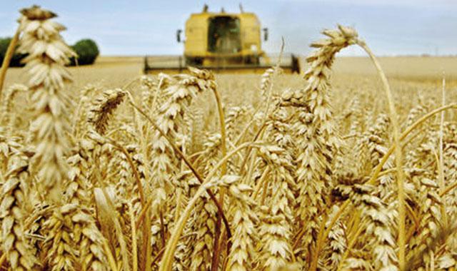 Le Maroc dispose d un stock de 23,5 Mqx de céréales