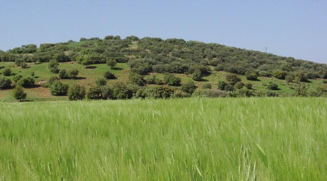 La FAO assiste la région de Tadla-Azilal
