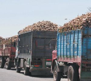 Beni Mellal : Des mesures pour doper la production de la betterave
