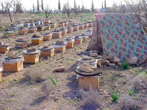 Berkane : 3e Forum méditerranéen de l'apiculture