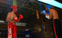 Kick-Boxing : un spectacle de qualité