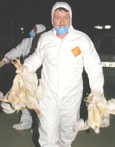 Grippe aviaire : l'Europe inquiète