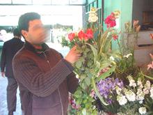 Profession fleuriste : les épines et la rose