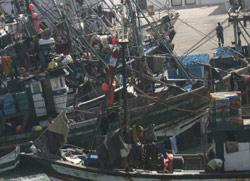 Pêche : Les dossiers de fond de l'ONP