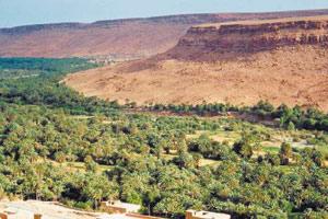 Tafilalet : Un programme pour réhabiliter les palmeraies de la région