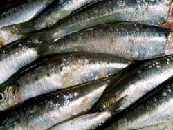 Sardine : Problème de fond