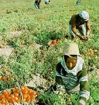 Agriculture : premier employeur du pays