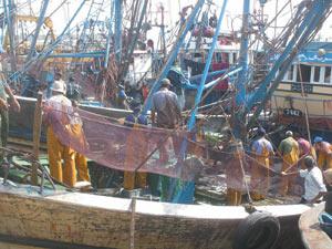 Laâyoune-Pêche maritime : Nouvelle halle pour accompagner le développement du secteur