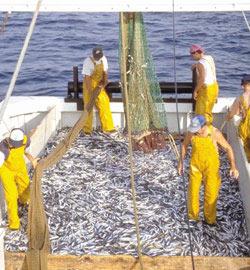 Pêche : L'INRH fait le tri