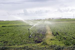 Berkane : Rencontre sur le programme national d'économie d'eau d'irrigation