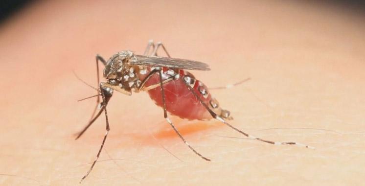 Virus Zika : Au moins 20 cas d'infection aux Pays-Bas