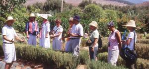 Le «jardin d'Ourika», une essence aromatisée au coeur de l'Atlas