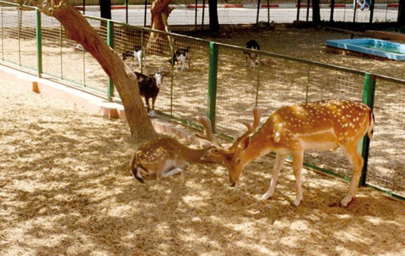 Safari Parc, un nouveau pôle d'attraction zoologique à Agadir