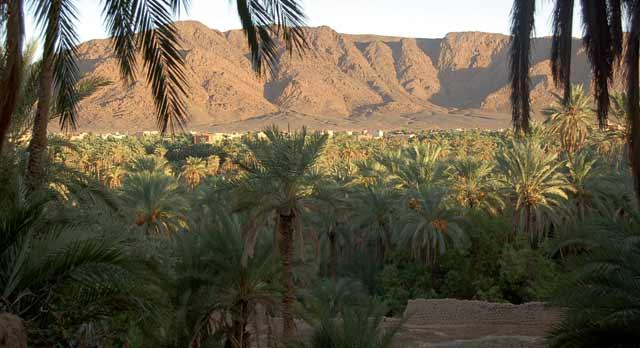 Assa : Les potentialités des oasis mises à l'honneur