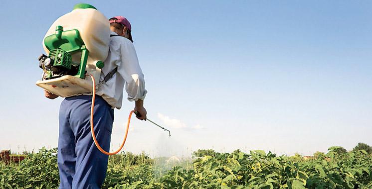 Élimination des pesticides obsolètes: Le Maroc et la FAO poursuivent leurs efforts communs