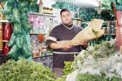 Marrakech se pique aux plantes