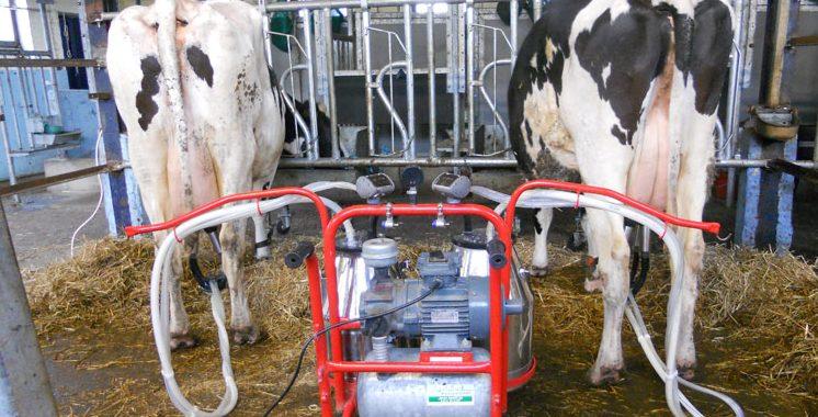 Nouaceur: Une formation à l'amélioration de la qualité du lait produit dans la région de Casablanca-Settat