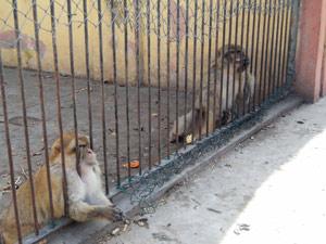 Les animaux du zoo de Casablanca en détresse