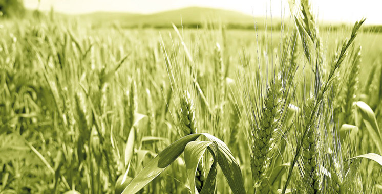 Agriculture-champ-de-ble