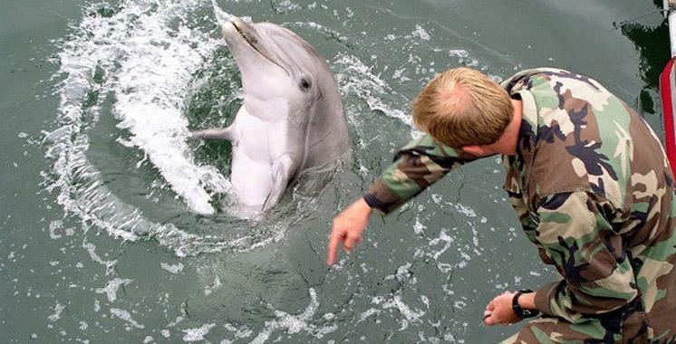 La Russie à la recherche de 5 dauphins pour des tâches militaires