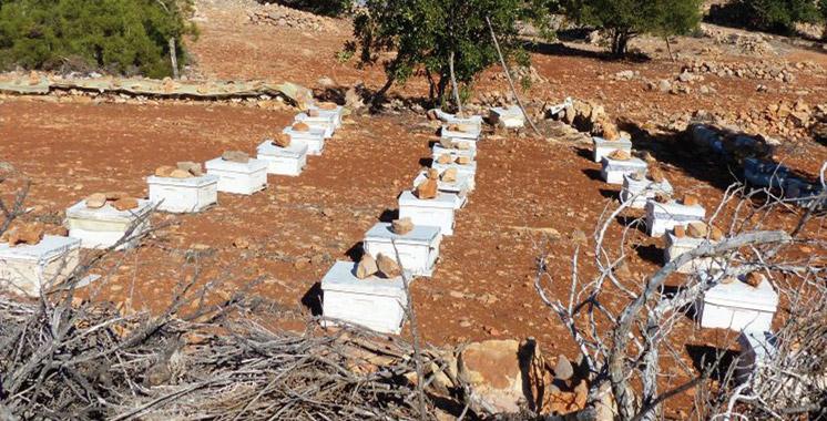 Cinq voleurs de ruches d'abeilles épinglés à Taroudant