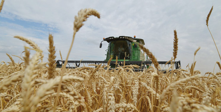 La production moyenne céréalière s'est améliorée de 35%