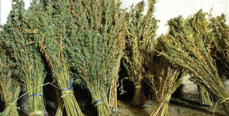 Agadir : Un trafiquant de drogue et de l'eau-de-vie sous les verrous