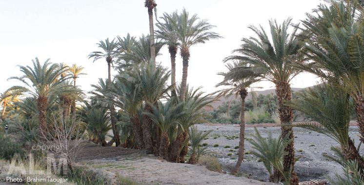 Programme oasis du Sud : 271 projets prévus d'être réalisés en 2016
