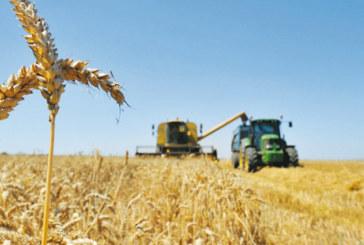 Agriculture : Le ministère prévoit une année agricole prometteuse