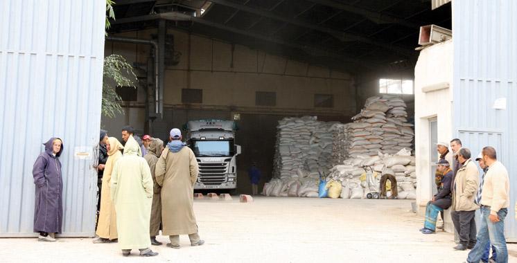 Marrakech-Safi : 454.500 qx d'orge subventionnée distribués aux agriculteurs