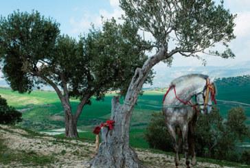 Vente aux enchères à Marrakech: Place aux œuvres d'art d'artistes  marocains engagés