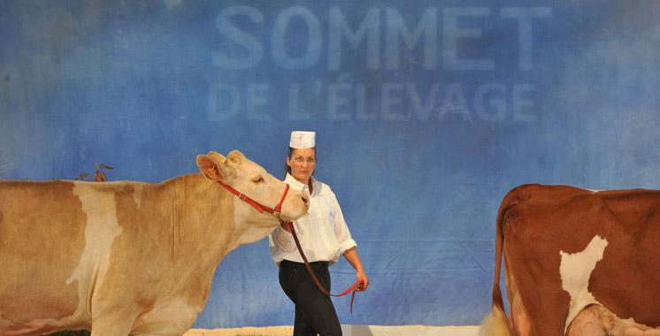 Le Maroc au Sommet de l'élevage de Clermont-Ferrand en octobre prochain