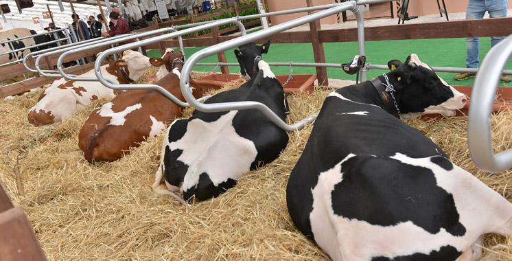 Aliments composés pour élevage : Plus de 160.000 quintaux bientôt à Tanger