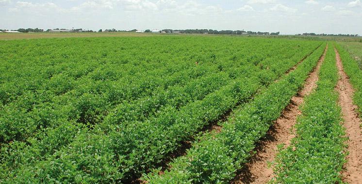 Recensement général de l'agriculture : Vers la création d'un Registre national agricole