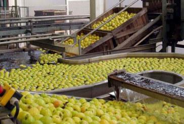 De la pomme à la pomme transformée : Le pommier veut se faire une place dans l'industrie