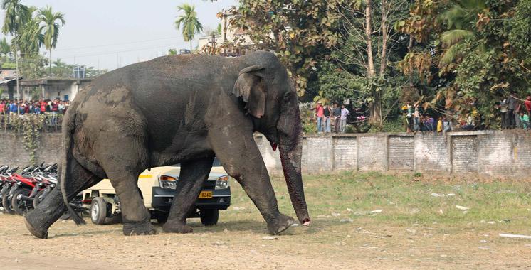 Inde : Cinq personnes d'une même famille écrasées par un éléphant