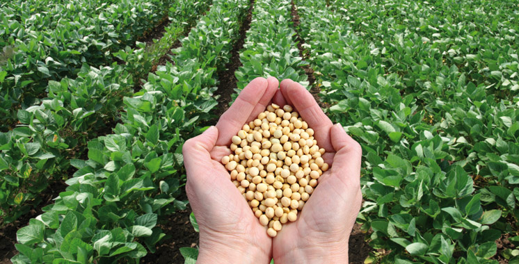 Agriculture-production-cereales-legumineuses