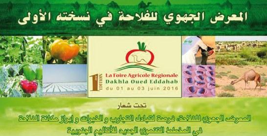 La première édition se déroulera du 1er au 3 juin: Dakhla se dote d'une foire régionale agricole