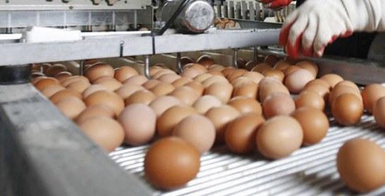 Ramadan : des œufs espagnols dans nos assiettes
