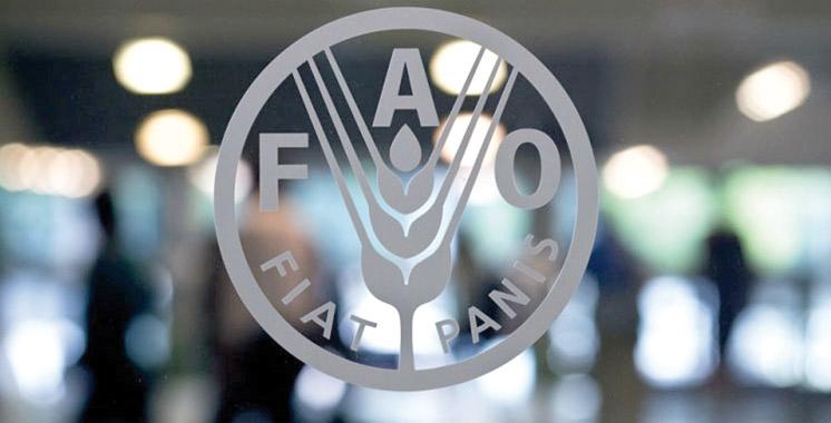 Réunion à Tunis du bureau  de la FAO pour l'Afrique du Nord