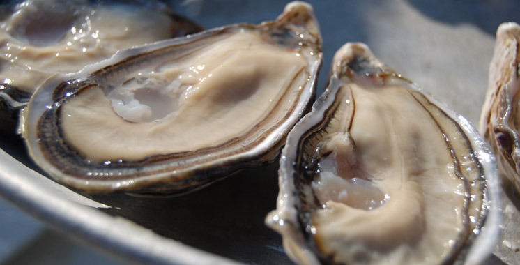 Dakhla : Levée de l'interdiction du ramassage et de la commercialisation des huîtres de Duna Blanca