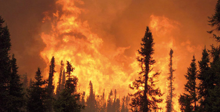 M'diq-Fnideq : Maîtrise totale d'un incendie de forêt dans la région d'Asmir