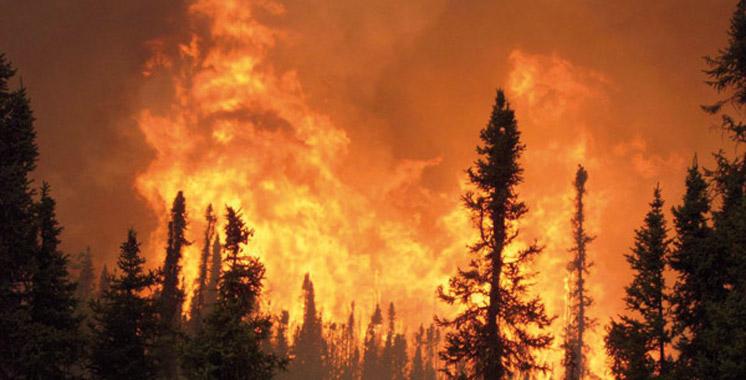 Un feu de forêt se déclare  près de M'diq