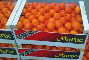 Agrumes : La production est de 2,29 millions de tonnes