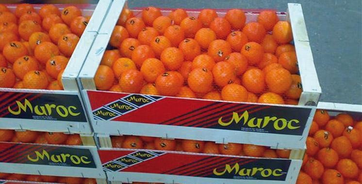Reprise à partir d'octobre des exportations d'agrumes marocains vers les USA