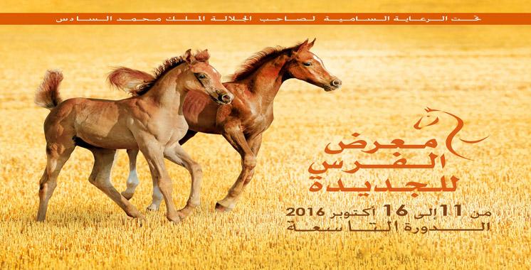 9ème édition du Salon du cheval d'El Jadida: Le pur-sang arabe émirati à l'honneur